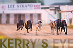 Droopys Kuyt No2 passes the line in the 26,000 Lee Strand 550 Final at the Kingdom Greyhound Stadium on Friday night..
