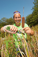 Mikayla Crieger,'19, snips cattails at the Potter League For Animals as she begins her Salve Regina community service project.