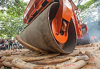 Five tonnes of confiscated ivory from the Philippines stockpile since 2009 is destroyed by steam roller at the Philippines Government Protected Areas and Wildlife Bureau of the Department of Environment and Natural Resources, Quezon City, Manila, Philippines, 21 June 2013.