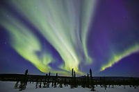 Aurora borealis sweeps across the night sky over the snow covered tundra in the White Mountains National Recreation Area, Interior, Alaska