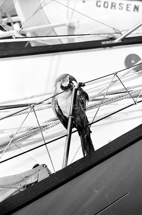 Passager clandestin ou compagnon de bord ?