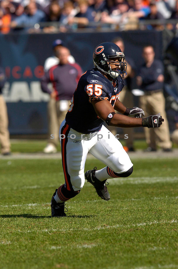 LANCE BRIGGS, of the Chicago Bears in action,against the  Buffalo Bills on October 8, 2006 in Chicago, IL...Bears win 40-7..Chris Bernacchi / SportPics.