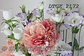 Gisela, FLOWERS, BLUMEN, FLORES, photos+++++,DTGK2172,#f#