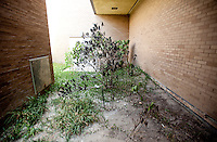 Trees are overcome with weeds outside the entrance to the old Dillard's at the Valley View Center Mall in Dallas, Texas, Saturday, August 21, 2010. Dillard's closed in 2008...MATT NAGER for the Wall Street Journal