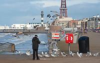 Man feeding seagulls on the promenade, Blackpool, Lancashire.