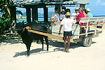 Tourists sitting on an ox cart taxi on the island of La Digue, Seychelles