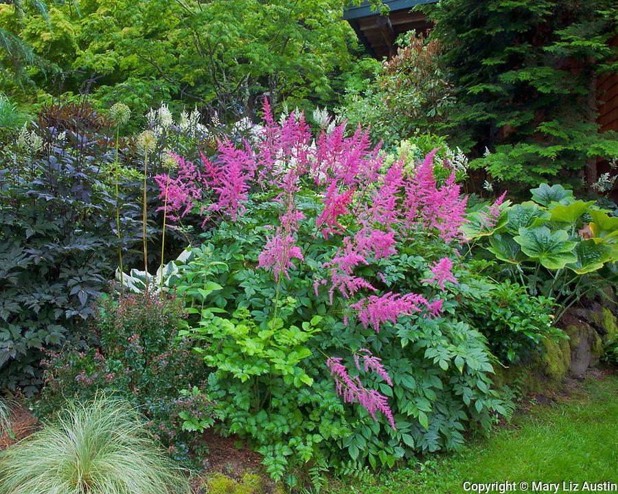Vashon-Maury Island, WA<br /> Perennial shade garden featuring astillbe, actea, allium, berberis, and podophyllum