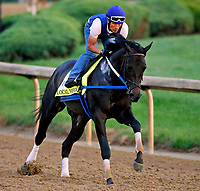 LOUISVILLE, KENTUCKY - APRIL 30: Local Hero, owned by e Five Racing Thoroughbreds and trained by Steve Asmussen, exercises in preparation for the Kentucky Derby at Churchill Downs on April 30, 2017 in Louisville, Kentucky. (Photo by Jon Durr/Eclipse Sportswire/Getty Images)
