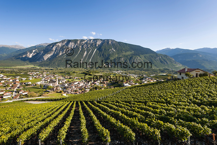 Switzerland, Canton Valais, Salgesch near Leuk: winegrowing at Rhone-Valley   Schweiz, Kanton Wallis, Salgesch bei Leuk: Weinanbau im Rhonetal