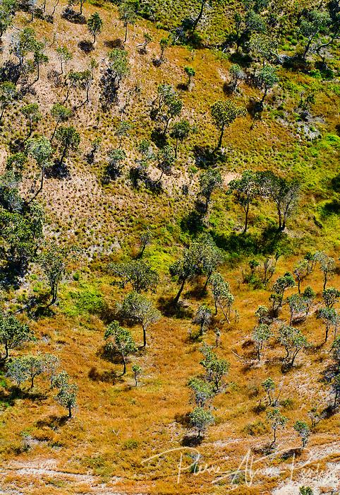 Nord calédonien, savane à niaoulis