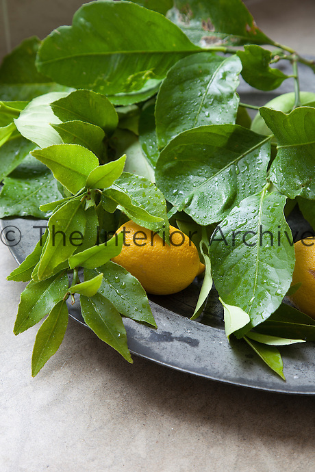 Detail of freshly washed lemons on a pewter platter in the kitchen
