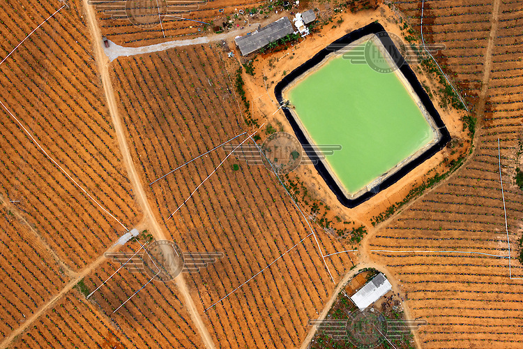 An irrigation pond feeds the fields of crops that surround it. /Felix Features
