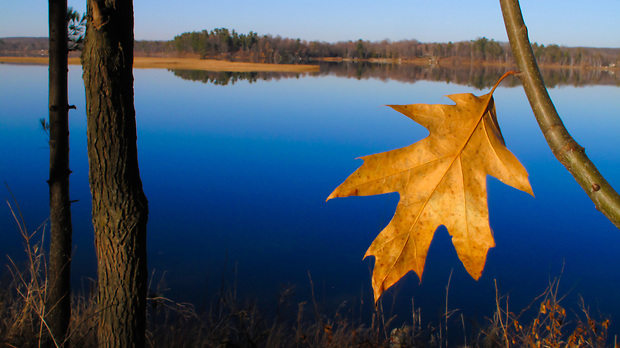 A lone leaf hangs from a limb along Serpent Lake, near Deerwood, Minnesota in the waning light of a November afternoon.