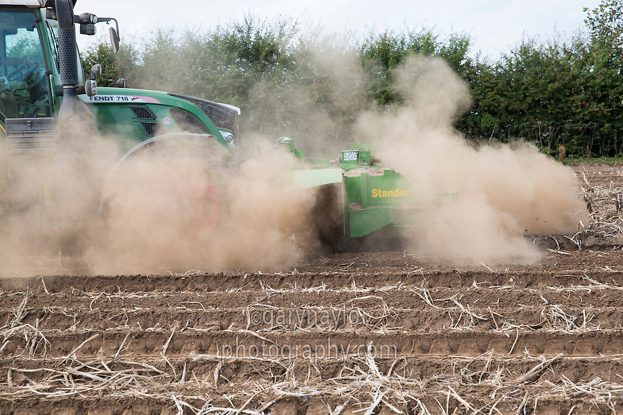 Topping potatoes - Lincolnshire, October
