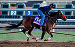 October 29, 2019 : Breeders' Cup Juvenile Fillies entrant Comical, trained by Doug F. O'Neill,  exercises in preparation for the Breeders' Cup World Championships at Santa Anita Park in Arcadia, California on October 29, 2019. Scott Serio/Eclipse Sportswire/Breeders' Cup/CSM