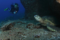 Green sea turtle, Chelonia mydas, resting in cave and diver (MR).  Hawaii.