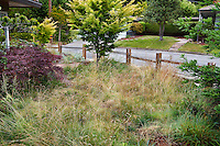 Front yard meadow native grass, Red Fescue (Festuca rubra 'Molate') lawn alternative separated from street by split rail fence,