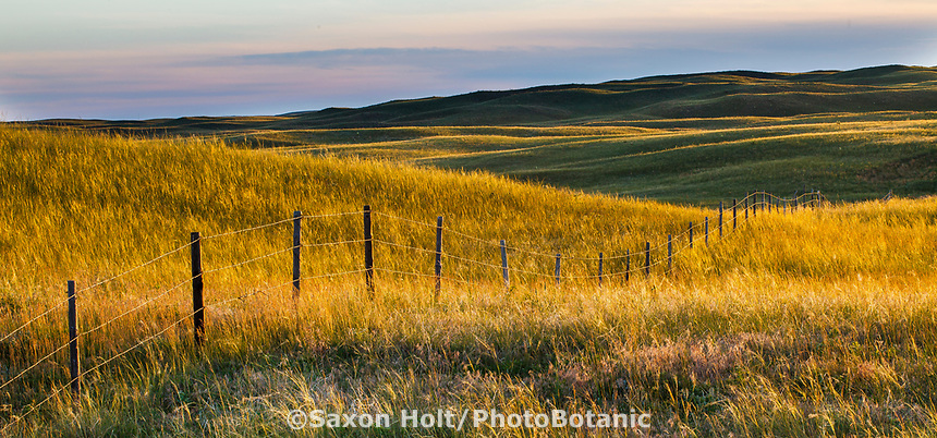 Barbed wire fence separating rangeland in Merz Ranch, Sand Hill Prairie, nebraska