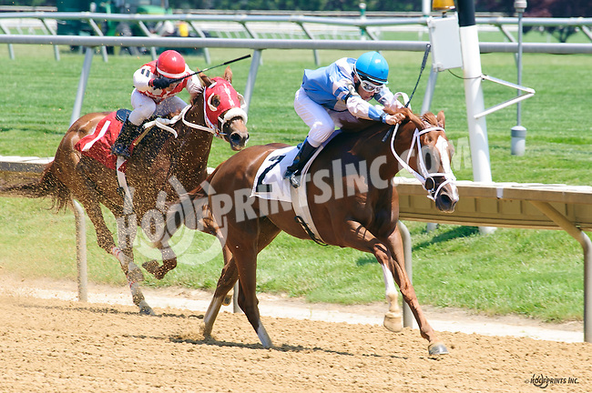 She's Going Strong winning at Delaware Park on 6/11/16