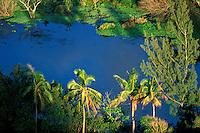 Lush green foliage lines the banks of the remote Waipio River on the Hamakua Coast of the Big Island of Hawaii.