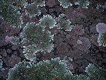 12.5.12 - Layers of Lichen...