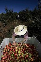 Rural Work in Portugal