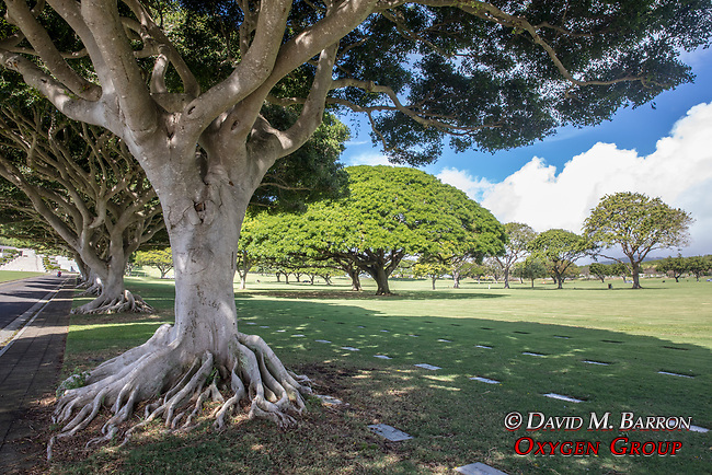 Trees, Punchbowl, National Memorial Cemetery of the Pacific