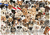 Kim, ANIMALS, REALISTISCHE TIERE, ANIMALES REALISTICOS, fondless, photos,+61 dogs and 1 kitten. (Terrier on the right appears as a puppy as well in the top row),++++,GBJBWP40867,#a#, EVERYDAY
