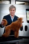 Il Barbone Toy The Number One con il suo handler Luca Stegani all' esposizione canina internazionale di sassari e chiaramonti 16-17 febbraio 2013