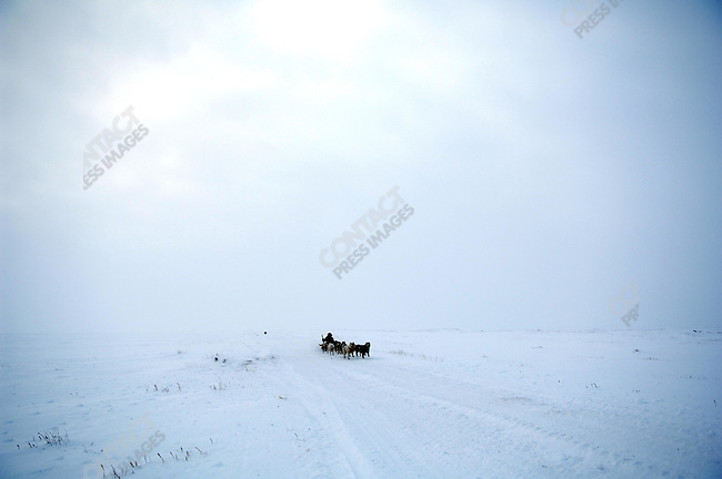 Pavel Yentynkeu, a hunter from the Artic village of Nutepelmen, located in the north of Chukotka, with his pack sled of Siberian Laikas. Chukotka Autonomous Okrug, Russia, April 2007.