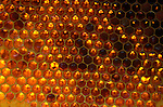 Honey Bee, Apis mellifera, inside hive showing comb cells with honey, social, network.United Kingdom....