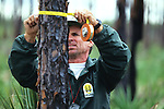 Steve Newland Measuring Tree