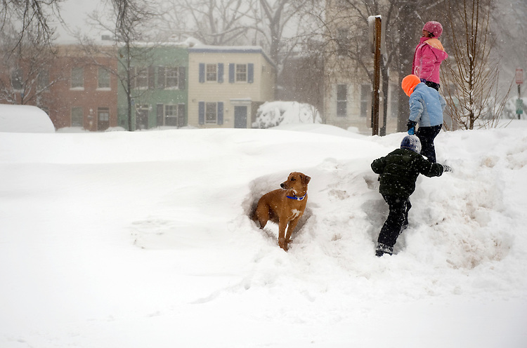 """Hal"" the dog pops out of a hole dug in a snow bank near Eastern Market during a winter storm expected to bring 10-15 inches of snow in the District with gust of winds near 40 miles per hour, Feb. 10, 2010."