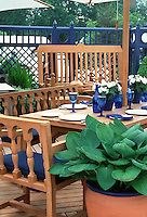 Hosta in blue-rimmed terracotta pot container on deck matched by blue tableware & chair pads, coordinated color theme, wooden furniture outdoor lifestyle and living, fence, umbrella