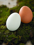 Naturally colored brown, beige, and bluish white eggs sitting on moss.