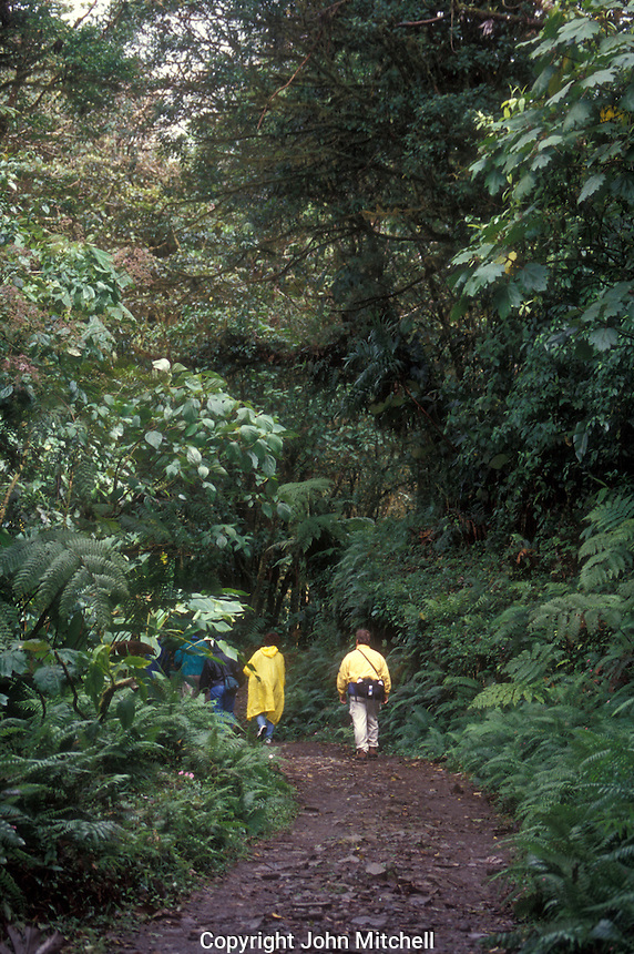 Hikers in the Monteverde Cloud Forest Reserve, Costa Rica