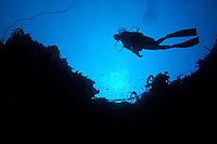 Diver Silhouette<br />