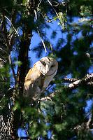 DISRURBING THE OWLS SLEEP