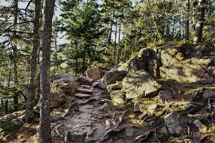 Hiking path through the woods, Acadia National Park, Mt, Desert Island, Maine, USA