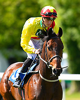 """Dock of the Bay ridden by George Downing goes down to the start of The Willton Homes """"Confined"""" Novice Stakes (Colts & Geldings)  during Afternoon Racing at Salisbury Racecourse on 17th May 2018"""