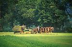 Six horse team. Amish bailing hay. Nippenose Valley, PA. 2003