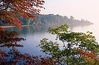 Flowering dogwood and chestnut oak<br /> Elk River ,  Chesapeake Bay<br /> Elk Neck State Park<br /> Cecil County,  Maryland