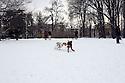 Dogs run at Sempione Park under the snow in Milan, February 5, 2012. Italy is hit by an atmospheric disturbance of Siberian origin. © Carlo Cerchioli..Cani corrono al Parco Sempione sotto la neve a Milano, 5 febbraio 2012. L'Italia è colpita da una perturbazione atmosferica di origine siberiana.