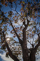 A tree throwing trunk and limbs to the sky, its branches adorned with leaves turning fall colors.