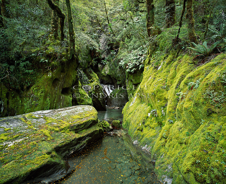 Small creek in Westland National Park. New Zealand.