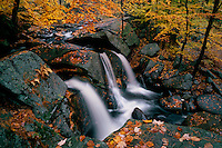Trap Falls and American beech trees<br /> Willard Brook State Forest<br /> Massachusetts