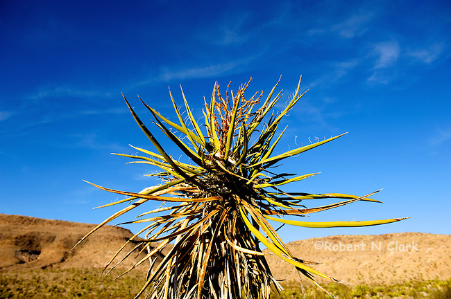 The Mojave National Preserve in the Black Canyon area, typical desert flora