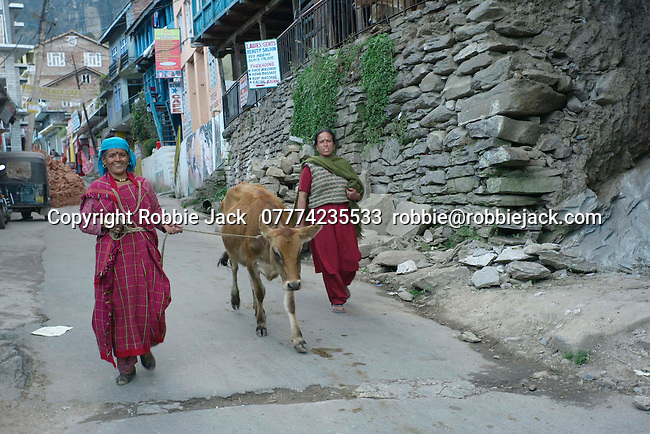 Two local ladies with a cow in Vashisht, Himachal Pradesh, India.