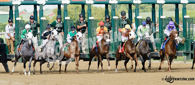 Ivory Shores winning at Delaware Park on 7/26/14