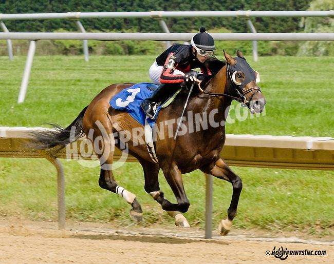 Stormin Monarcho winning at Delaware Park racetrack on 6/16/14